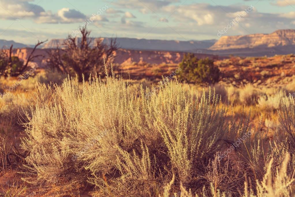 Prairie desert landscapes