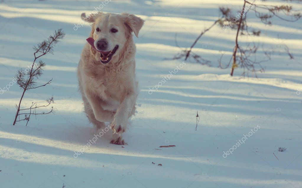 Dog in winter forest