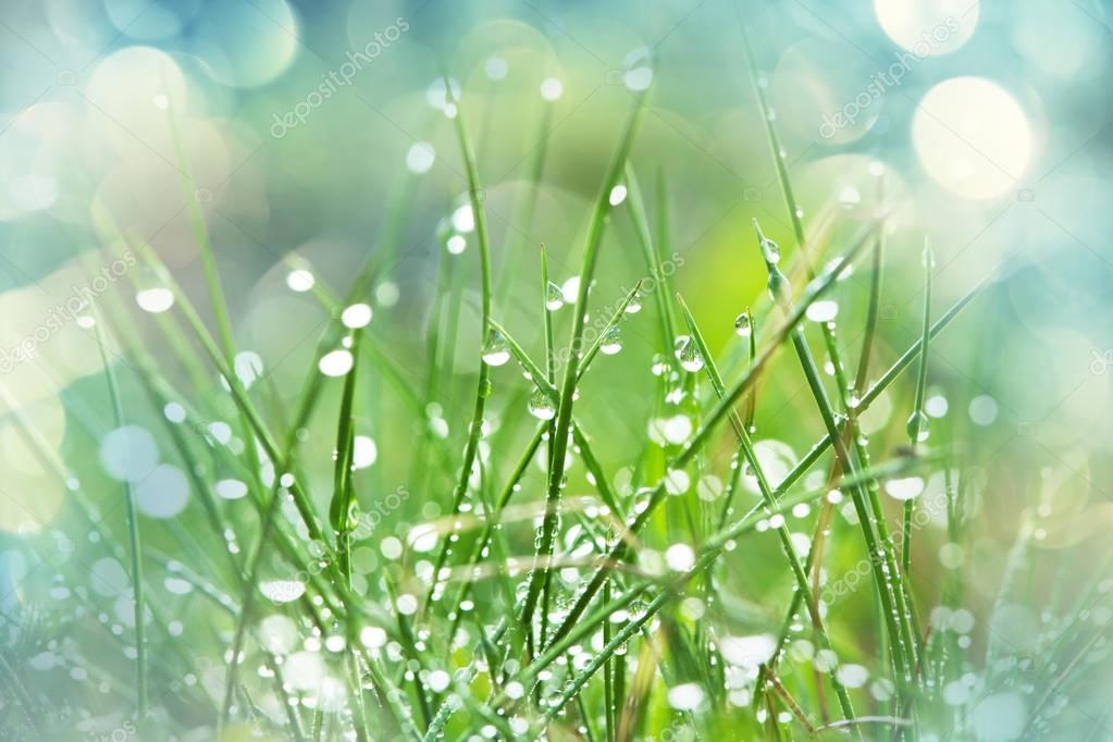 Wet grass close up