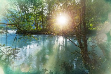 River in the forest at sunrise
