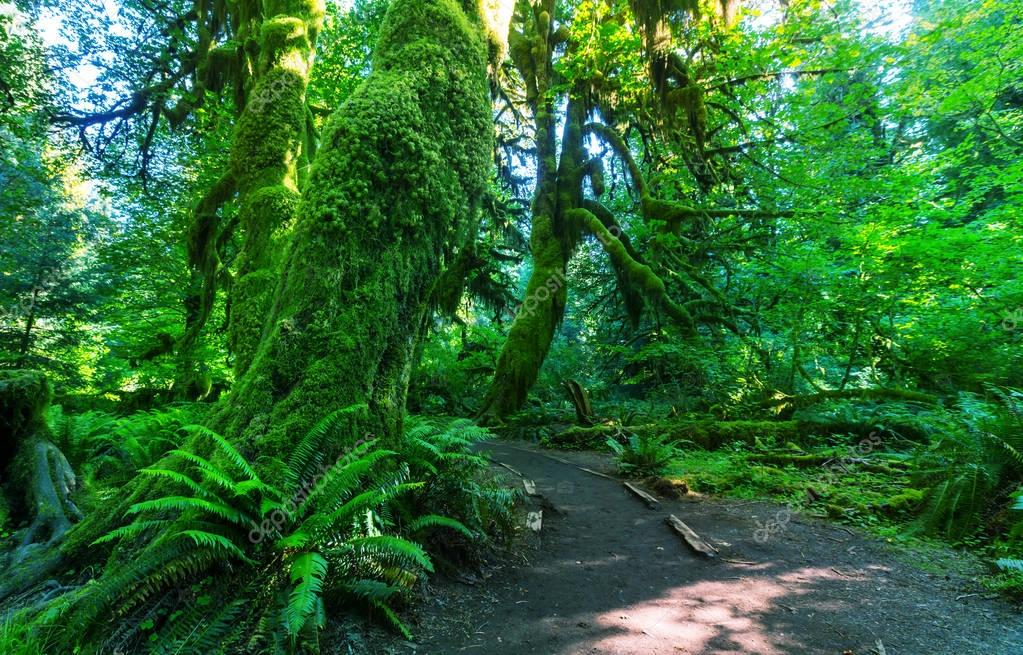 Fabulous rain forest in Olympic National Park