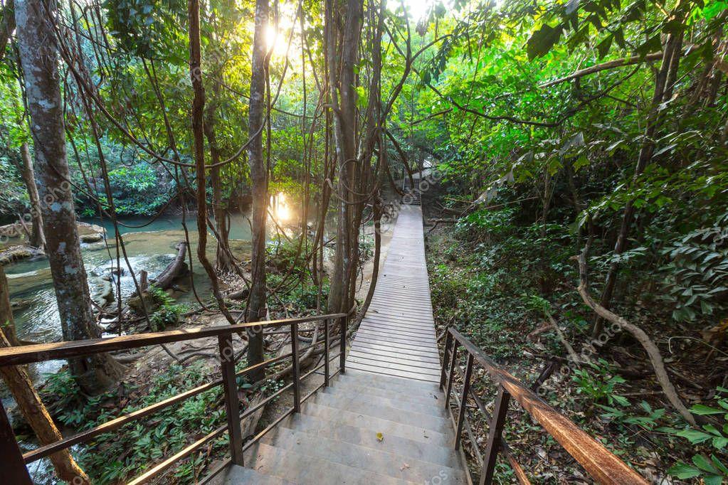 Wooden walkway in jungle
