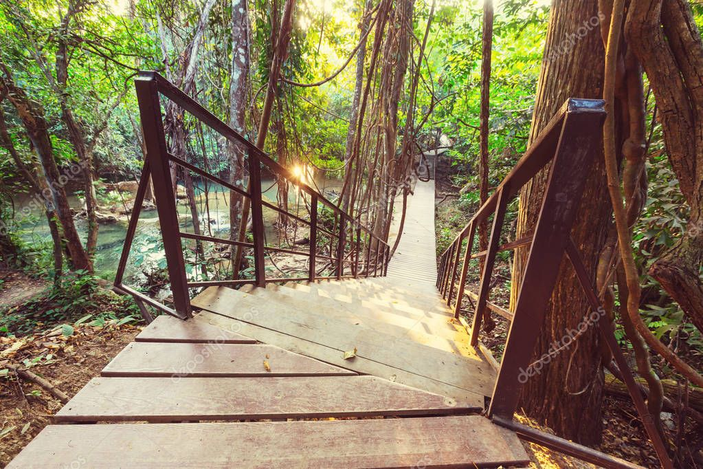Wooden walkway in jungle