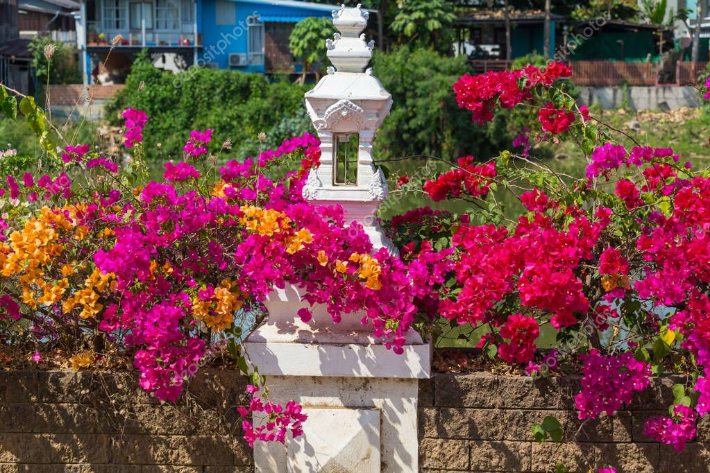 Colorful flowers in bougainvillea