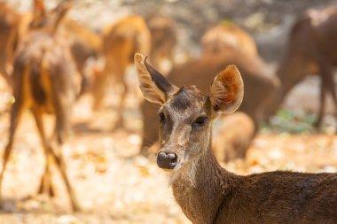 Deer in green forest