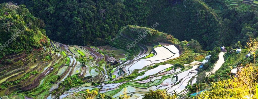 Beautiful Green Rice terraces
