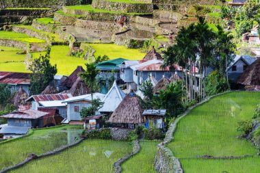 Beautiful Green Rice terraces