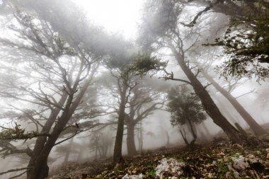 """Картина, постер, плакат, фотообои """"волшебный туманный лес пейзаж ретро"""", артикул 151907874"""