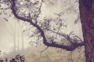Misty Rainforest in  Costa Rica,  Central America