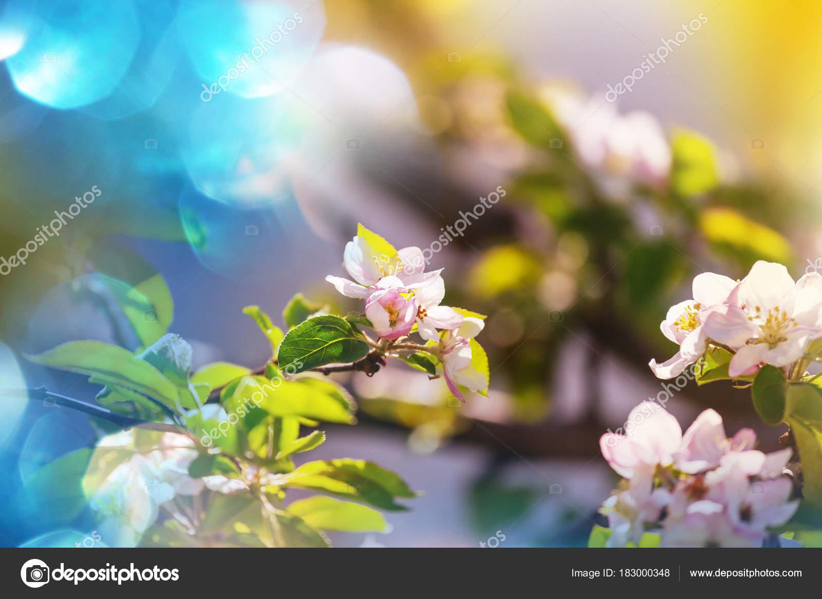 Spring Scene Blooming Flowers Close Stock Photo Kamchatka 183000348