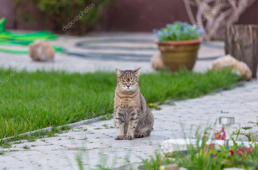 domestic cat portrait relaxing