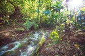 Krásné proudu vody proudící v deštném pralese. Kostarika, Střední Amerika