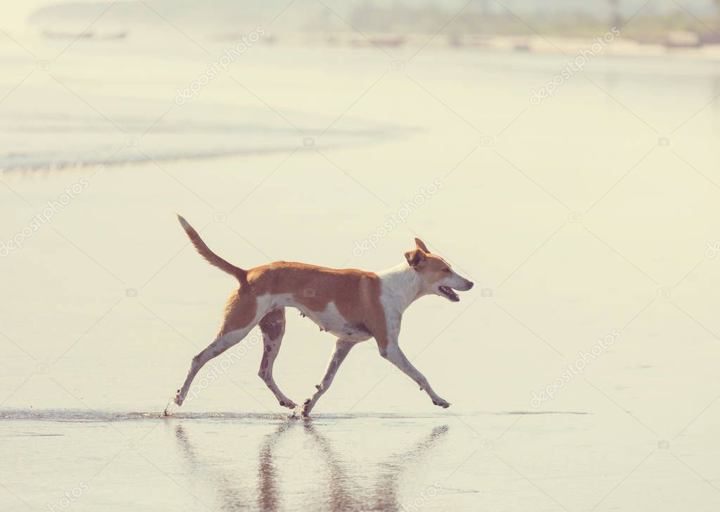 dog on beach running near water