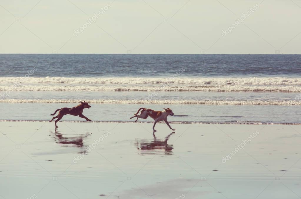 dogs on beach running near water