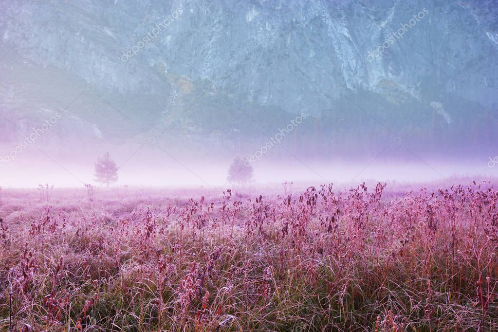 Foggy meadow in the sunny morning with light spots.