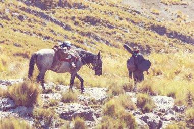 Donkey caravan in Cordiliera Huayhuash, Peru, South America