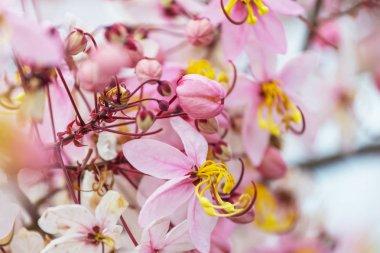 Tropical garden flowers close up