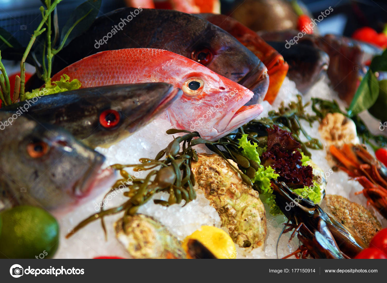 8aad3e6fb3c9d6 Вітрина магазину риби — Стокове фото — продукти харчування © sergioz ...
