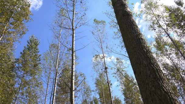Vysoké podzimní stromy v listnatého lesa s slunečního záření
