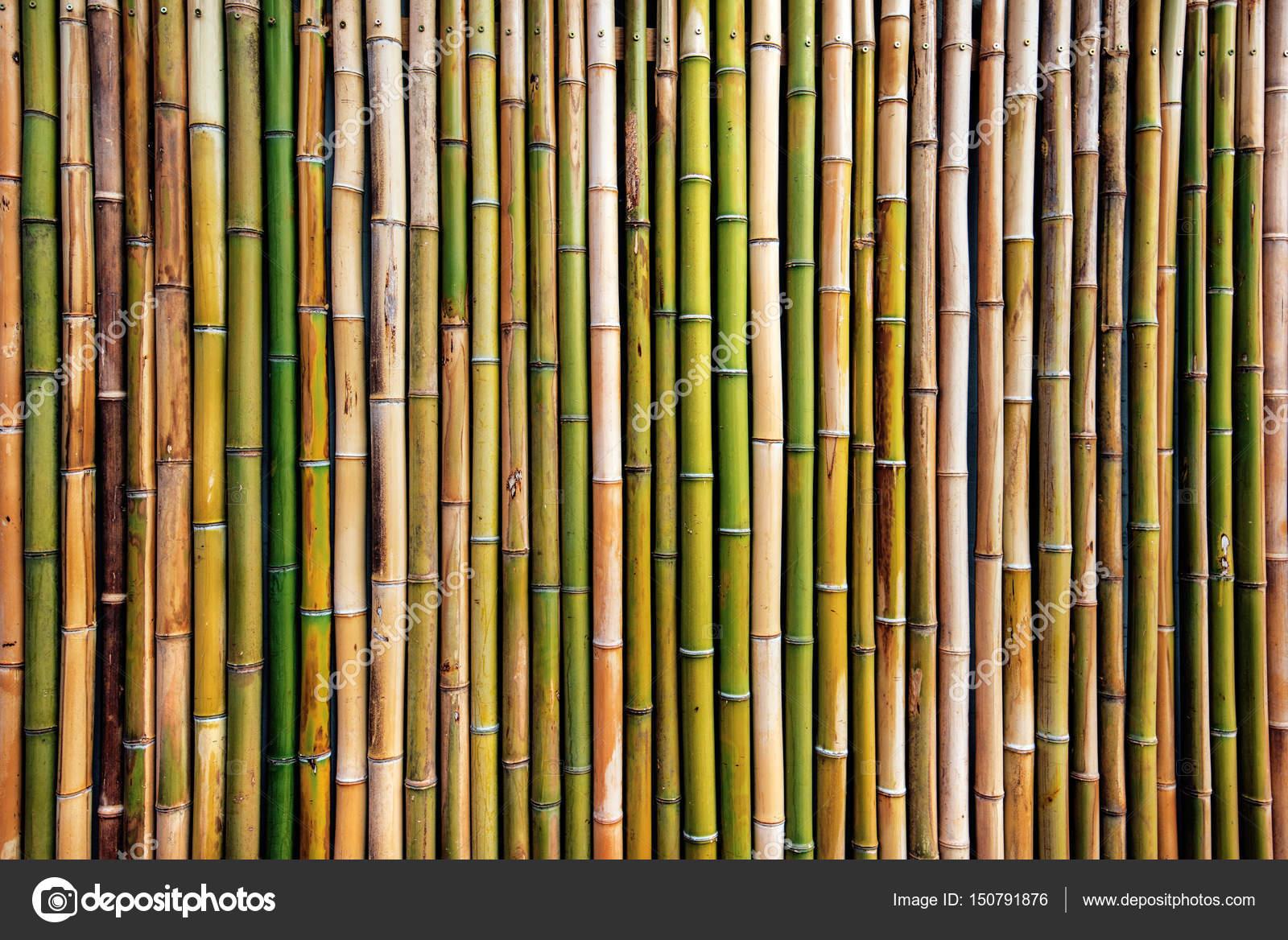 Trockenen Bambus Baum Zaun Wand Hintergrund Stockfoto