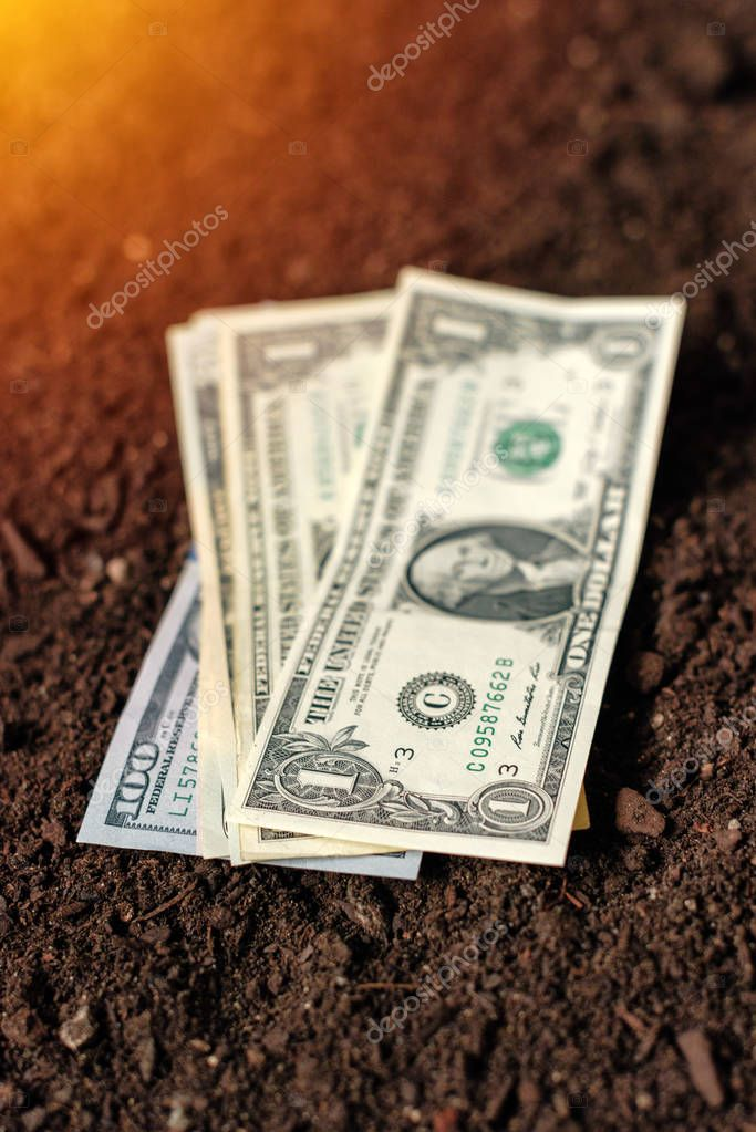 Dollar banknotes cash money in soil ground, income in agricultur