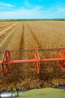Combine harvester revolving reel harvesting wheat crops