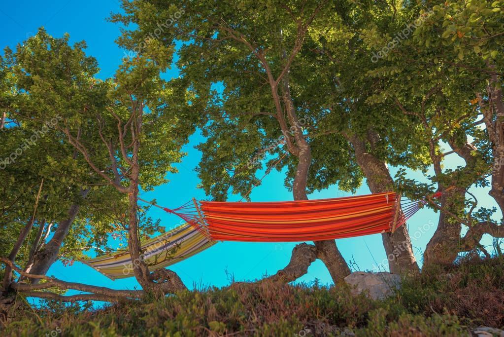 Hammocks on trees