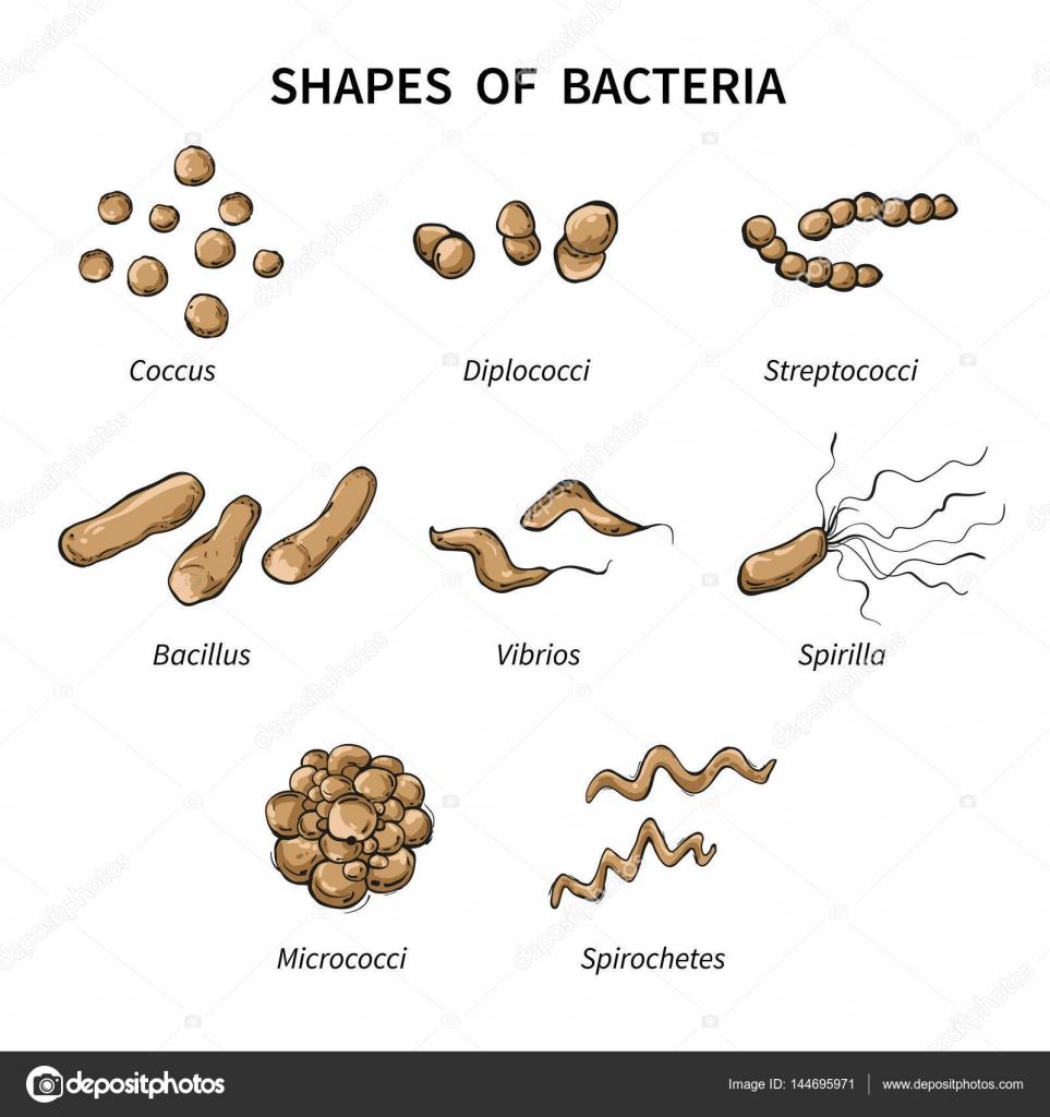 baktériumok op hartklep