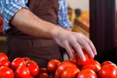 Seller sorting tomatoes