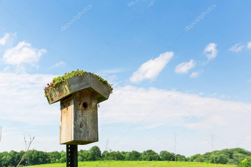 wooden nesting box on green meadow