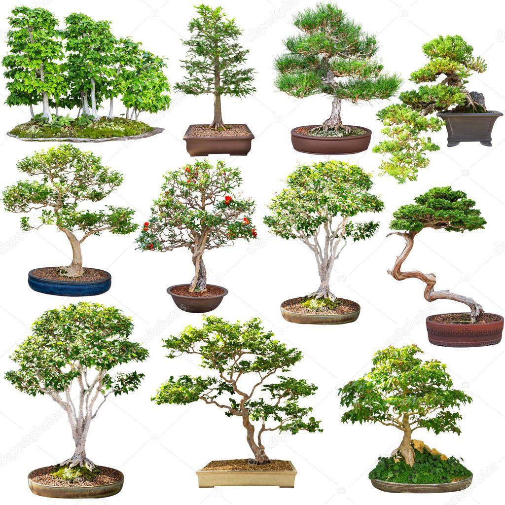 Natural bonsai set