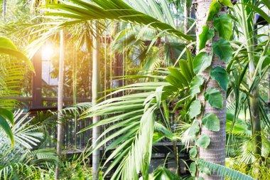 botanical greenhouse garden