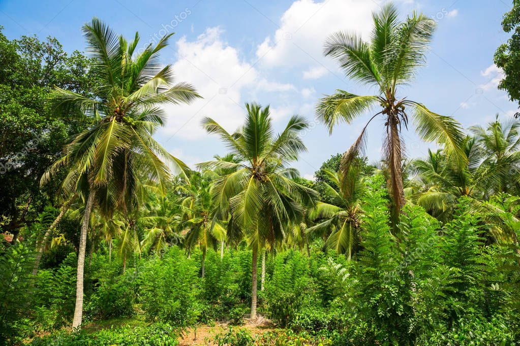 Scenic tropical jungle forest