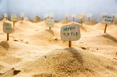 Turtle cemetery on Sri Lanka. Graves with taps, sea reptiles stock vector