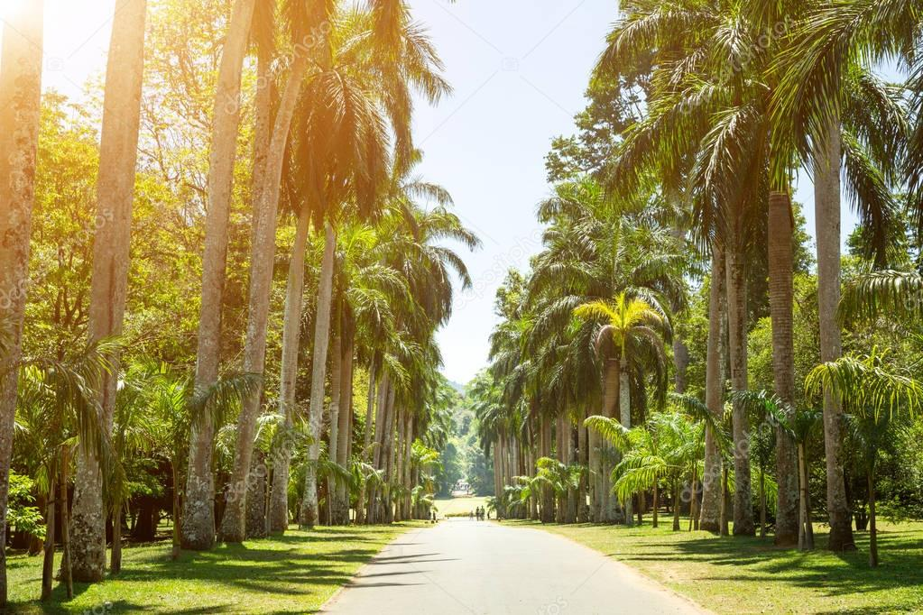 Beautiful palm alley