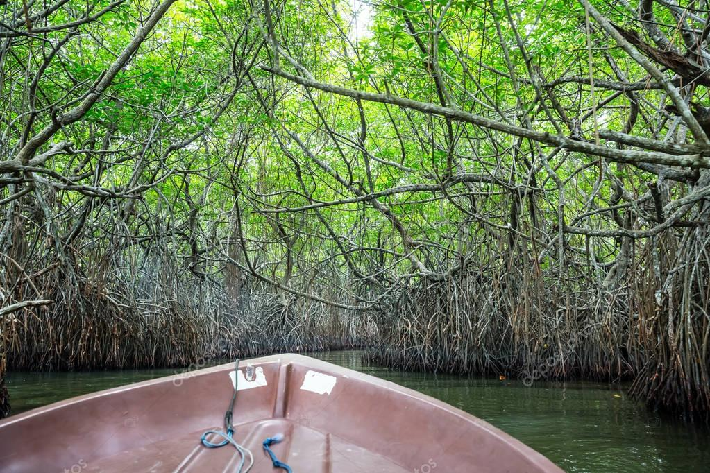 Jungle river and tropical mangroves