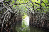 Mangrovové porosty řeky a tropické džungle