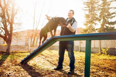 cynologist training dog to keep balance on playground