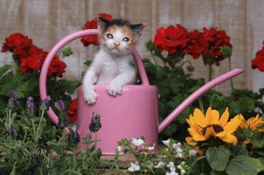 Cute 3 week old Baby Kitten in a Garden Setting