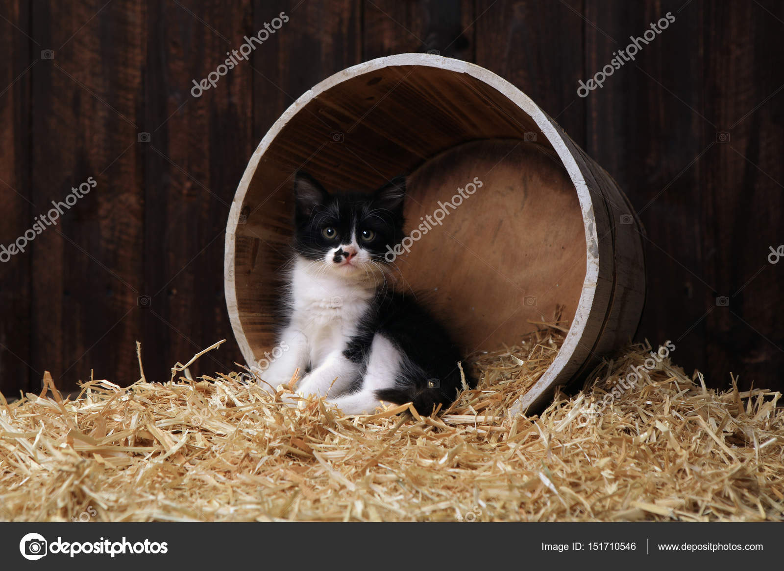 Cute Adorable Kittens in a Barn Setting With Hay — Stock