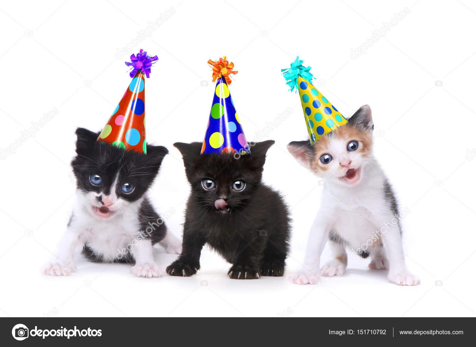 k narozeninám píseň narozeniny píseň zpívá koty na bílém pozadí — Stock Fotografie  k narozeninám píseň