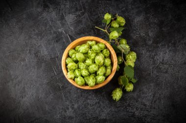 Fresh green hops