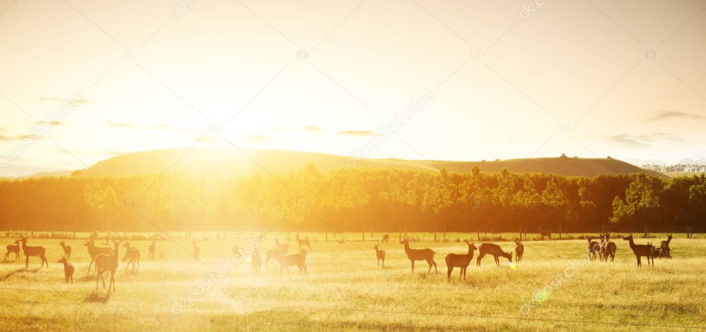 beautiful pasture with animals near hill