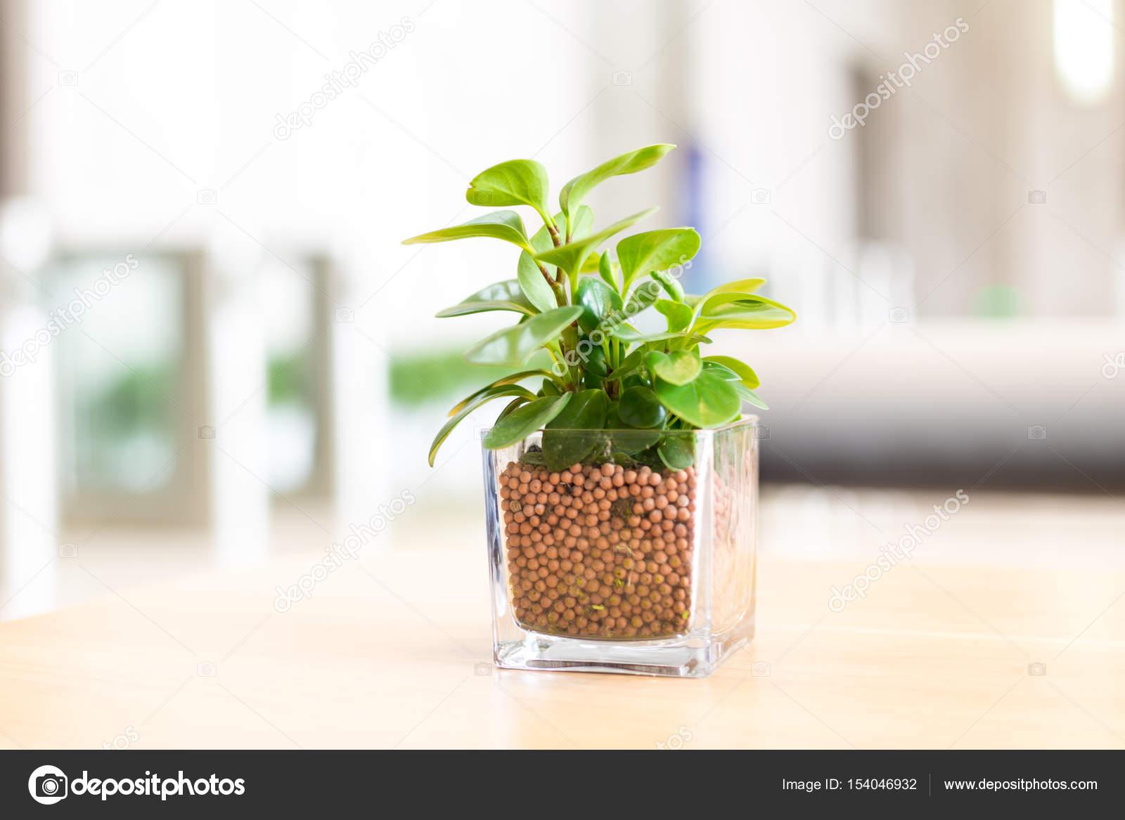 pot de verre avec une plante verte sur la table photographie zhudifeng 154046932. Black Bedroom Furniture Sets. Home Design Ideas