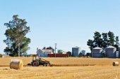 Zlatavá pšeničná pole v letní den