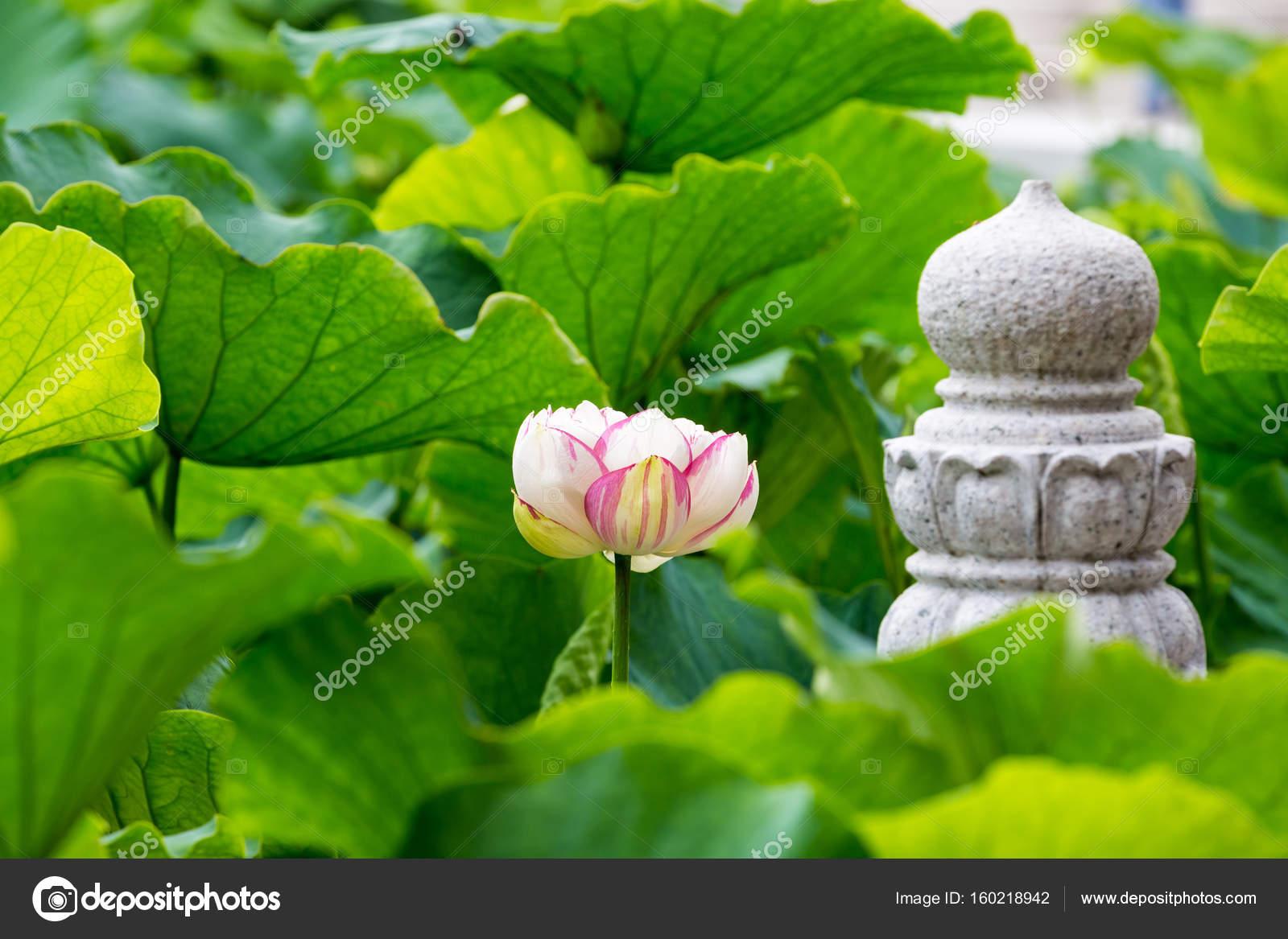 Buddha Lotus Flower Stock Photo Chungking 160218942