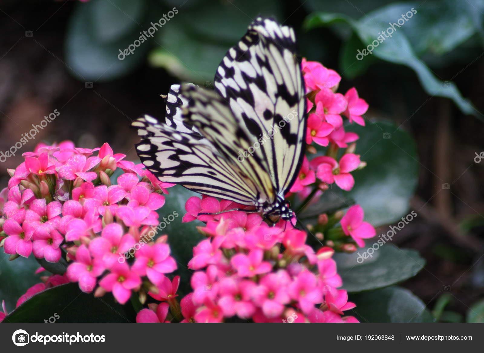 Imágenes Mariposas Muy Bonitas Muy Bonita Mariposa Colorida