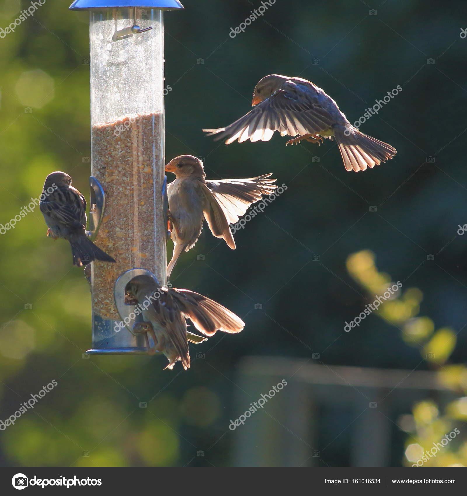 feederbirds wild unique for bird station image feeder birdsfinch full in compact finchesfinchfeederfeeding garden feeding