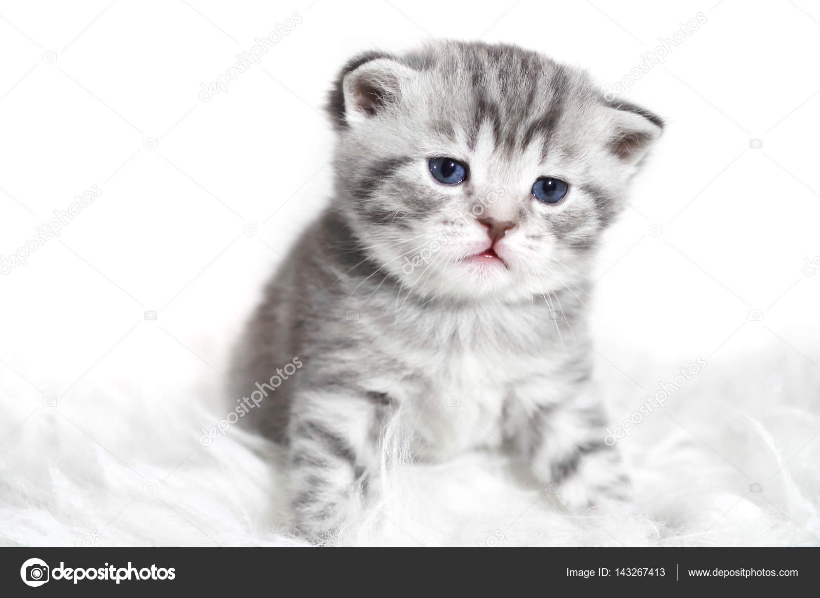 Portrait Of A Beautiful Baby Kitten With Blue Eyes Grey Tabby