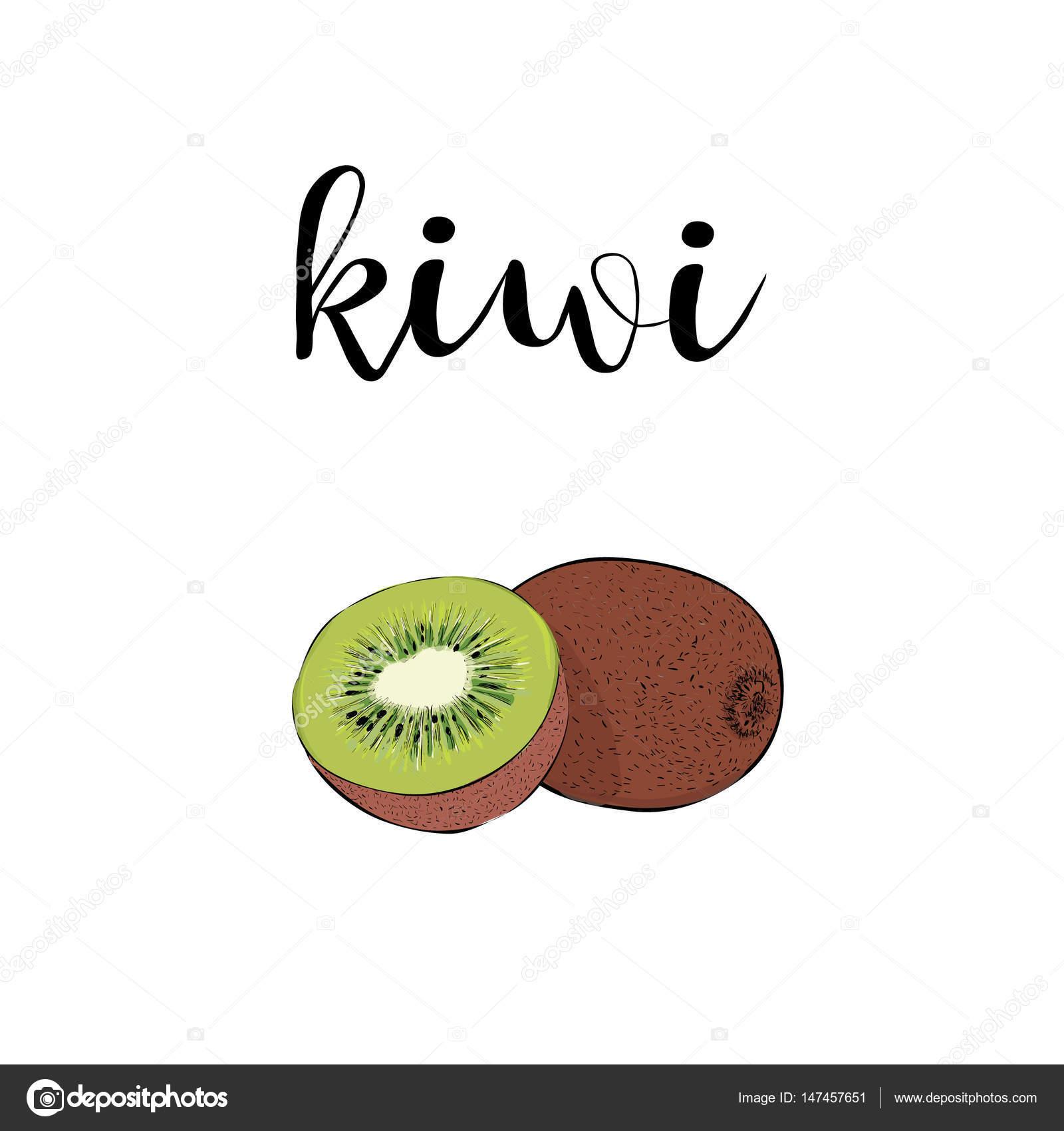 Kiwi Frucht Farbe Vektor-Illustration mit kalligraphische Inschrift ...